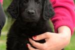 puppy Boomer